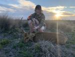 Hog Deer Australia