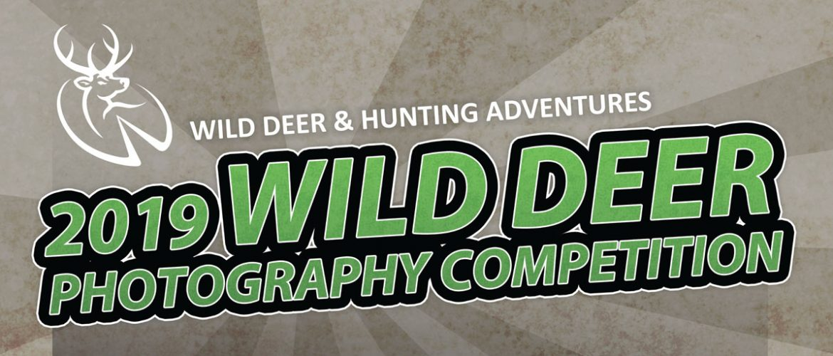 2019 Wild Deer Photography Competition